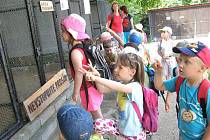 Do stanice Aves chodí děti  z mateřinek i základních škol obdivovat ušlechtilé sovy. Nejvíce obdivu sklízí sovice sněžná, kterou má i filmový hrdnina Harry Potter.