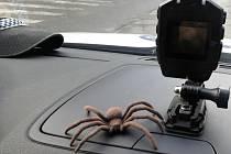 Obří pavouk vyděsil obyvatele kladenského sídliště. Ukázalo se, že jde o gumovou hračku.