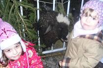 Zvířátka v živém betlému přitahovala zejména děti.