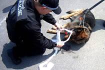 KLADENŠTÍ STRÁŽNÍCI museli uspat rozzuřeného psa.