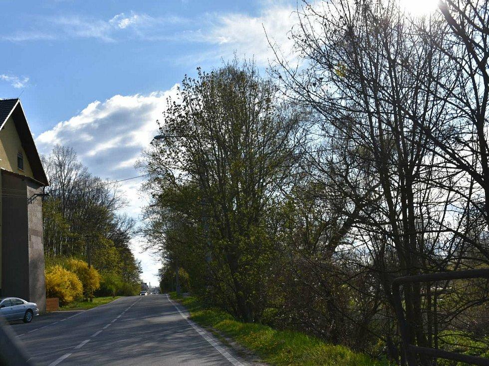 V Kladně se 5. května 2021 zřítil strom na dítě. Místo události v lesním porostu.