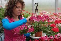 Sonia Carraro představuje vlastnoručně vyšlechtěnou roční rostlinu.