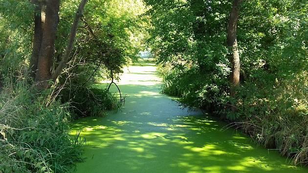 Vranský potok je aktuálně brčálově zelený.
