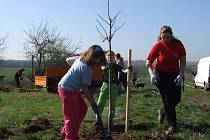 Dřetovičtí se zasloužili o vylepšení životního prostředí, zasadili totiž tři desítky ovocných stromů.