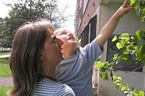 VINNOU RÉVU  pnoucí se po fasádě domu ve Vodárenské ulici se Jana Vlčková snaží společně s manželem zachovat. Pokud se s ostatními shodnou , bude život popínavky zachráněn.