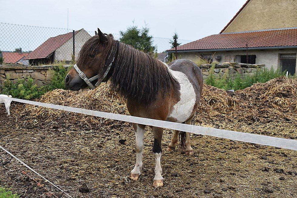 Kůň Dity Kunové v Žilině..