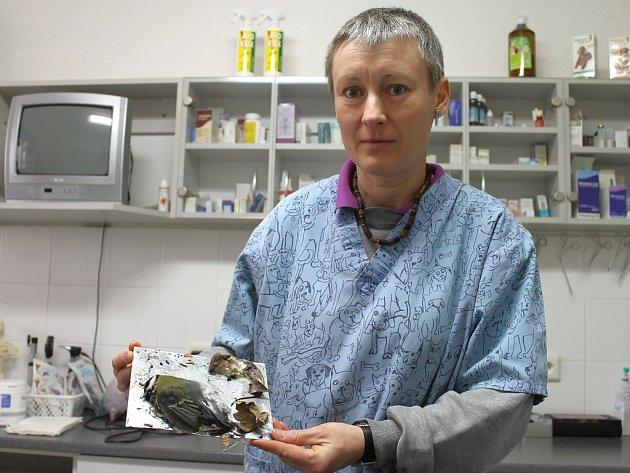 Kladenská veterinářka Alice Franková s lepovou deskou, na které se zachytily myš i sýkorka.
