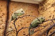 V Zooparku Zájezd byla otevřena nová expozice, která čítá čtyřicet nádrží a vitrín s osmdesáti kusy zvířat.