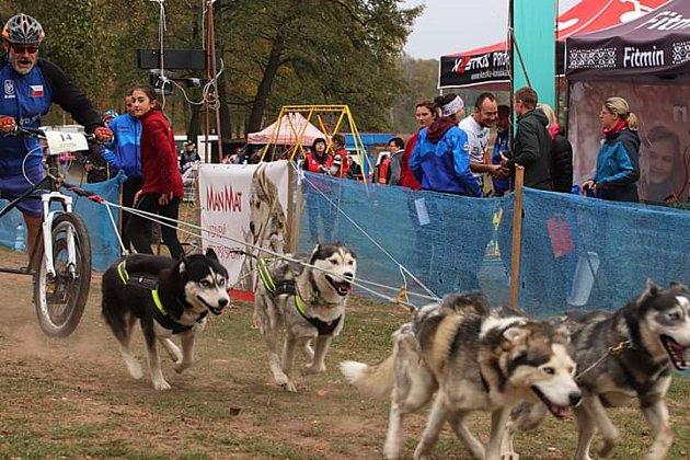 Závody psích spřežení se konaly ve Stochově.