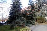 Padlý strom v Mírové ulici ve Slaném