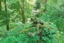 Lesní terén v okolí zříceniny hradu Jenčov je mimo vyznačené cesty místy špatně prostupný. Jsou zde staré vzrostlé stromy i popadané větve.