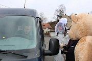Do ulic se vydala široká škála maškar, nechyběli například tradiční medvědi.