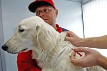 Někteří majitelé psů se povinného čipování psů ve Slaném obávají. Odborníci ale tvrdí, že to je zcela zbytečné