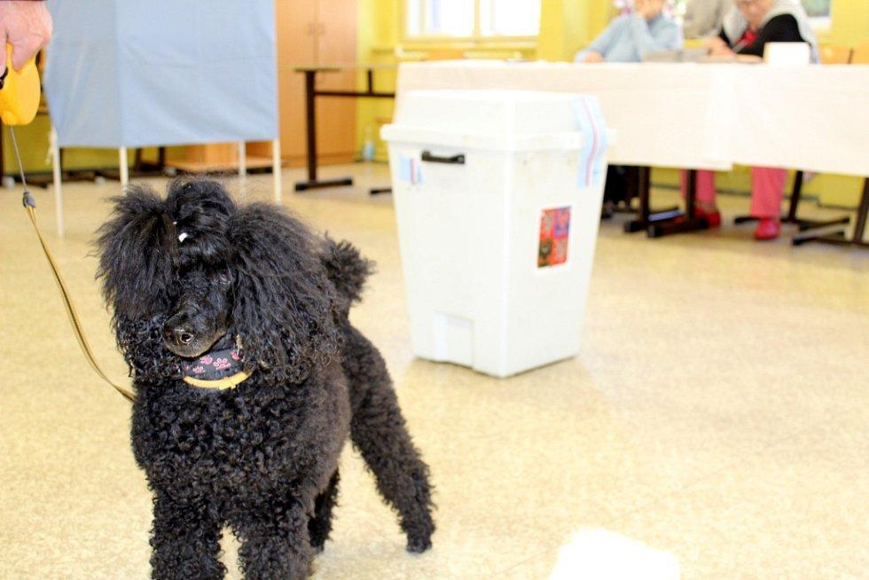 K volbám v Kladně doprovodilo své páníčky také několik psů.