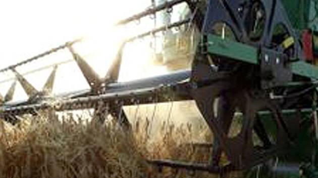 Třicet procent úrody kladenských zemědělců bude použitelných pouze ke krmným účelům. Ztráty jsou zřejmé.