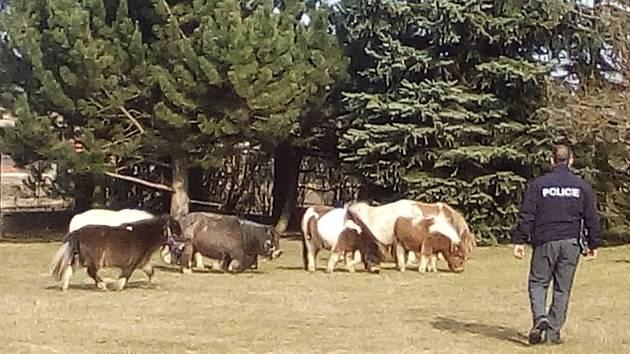 Kvůli poníkům v areálu mateřské školy museli do Žiliny vyjíždět i policisté.