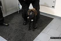 Majitel uvázal psa v Kladně u obchoďáku, pro zvíře už se ale nevrátil.