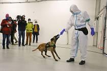 Z prezentace služebních psů Celní správy ČR určených k vyhledávání nemoci covid-19.