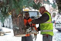 Kácení a stavba vánočního stromu v Kladně.