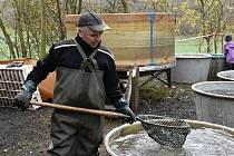 Sobotní výlov soukromého rybníka ve Stradonicích.