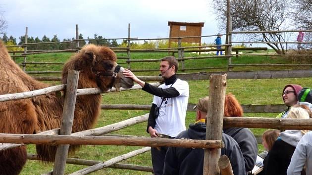 KOMENTOVANÉ KRMENÍ velbloudice Áji si v zooparku Zájezd mohou užít nejen děti, ale i dospělí.