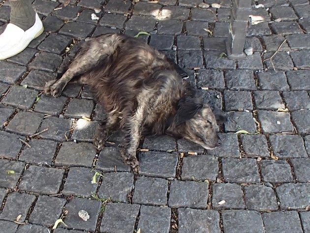 Zkopaný pes.