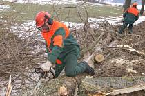 Silničáři pokáceli téměř tři stovky stromů