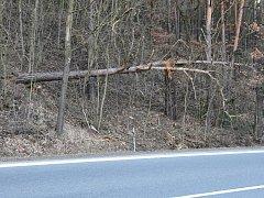 Nebezpečné stromy u Kokšína