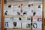 Bazar pro kočky v Klatovech.