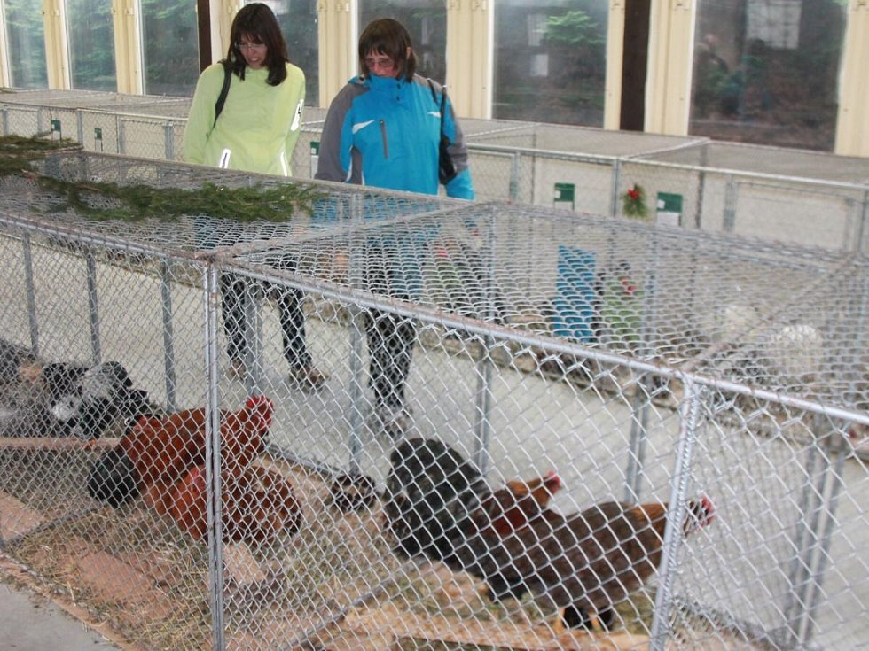 Výstava chovatelů v Nýrsku