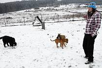 Cvičit poslušnost svého štěněte přišla do psí školy i Petra Bečvářová z Chodské Lhoty. Dojíždět jinam by prý nechtěla.