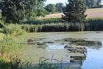Rybník v Klatovech ve směru na Sobětice, u Šparglu.