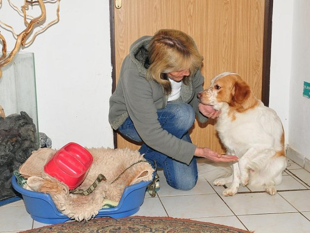 Vedoucí útulku v Klatovech Miloslava Šeflová ukazuje pelíšek, který útulku věnovala majitelka pravděpodobně otráveného psa.