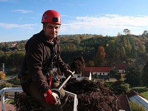 Snižování čapího hnízda v Žihobcích.