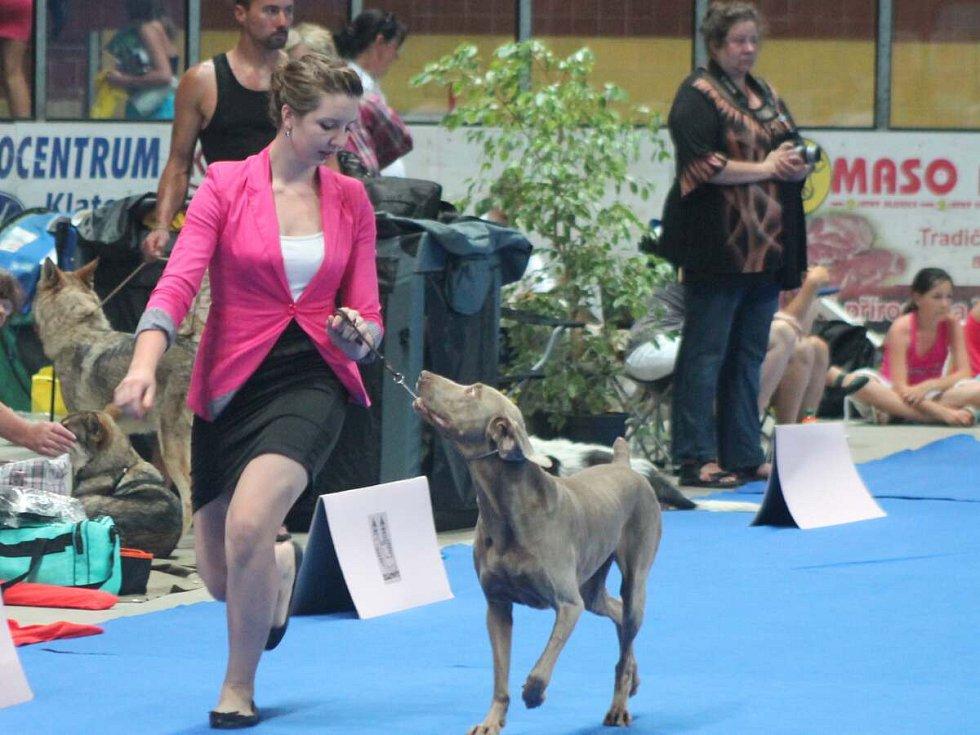 Výstava psů v Klatovech