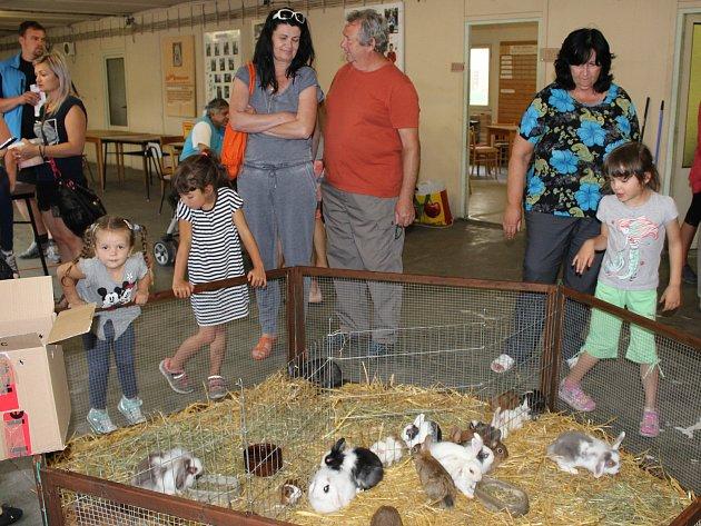 Výstava drobného zvířectva v Klatovech 2018.