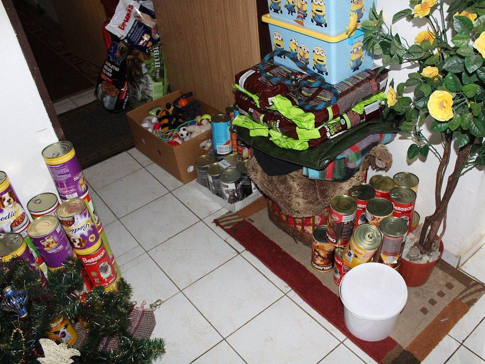 Díky skvělé péči v klatovském psím útulku se obě týrané fenky vracejí do života. Jim i ostatním pejskům připravili dárci krásné Vánoce.