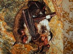 Výprava za netopýry