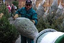Na snímku při zabalení stromku u obchodního domu Kaufland jeden z prodejců  Jaroslav Vopat.