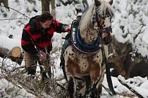 Petr Procházka s Narexem při tahu v lese.