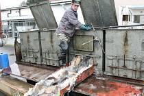 Plné sádky kaprů čekají na předvánoční prodej v Klatovském rybářství.