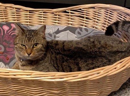 VBezděkově se ztratila kočka.