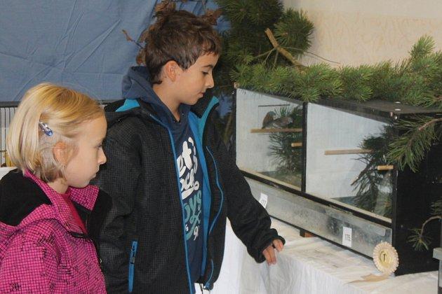 Výstava exotického ptactva v Klatovech