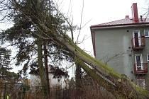 Ve Školní ulici v Klatovech spadl 6. února při bouřce vzrostlý strom.