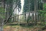 Řádění vichřice na Šumavě.