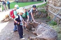 Děti ze základních škol v Bezděkově a Předslavi  si na svém školním výletě na hrad Točník mohly pohladit i živého osla.