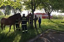 Odchyt koní na Horažďovicku.