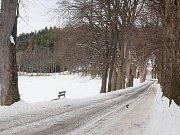 V historické aleji z Kašperských Hor na Tuškov (na snímku) by měly padnout desítky stromů.