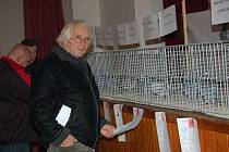 Výstava poštovních holubů