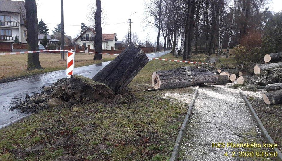 Padlý strom ve Svéradicích